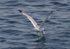 Un oiseau au-dessus de la mer Photo stock