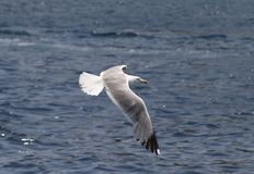 Un oiseau au-dessus de la mer Photographie stock libre de droits