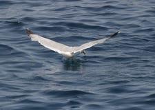 Un oiseau au-dessus de la mer Images stock