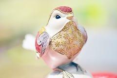 Un oiseau ayant le divers plumage coloré images libres de droits