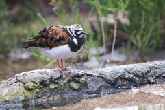 Un oiseau coloré se repose sur un logarithme naturel près de l'eau. Photographie stock
