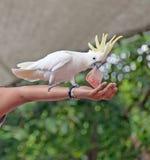 Un oiseau dans la main photo stock