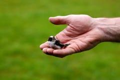 Un oiseau dans la main Images stock