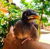 Un oiseau dans le bras photo stock
