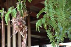 Un oiseau dans le nid du ` s d'oiseau Photographie stock