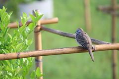Un oiseau de colombe était perché sur la branche de l'arbre sauvage dans le jardin image stock