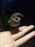 Un oiseau de moineau à disposition Photo stock