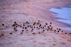 Un oiseau différent d'autres Image libre de droits