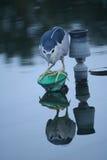 Un oiseau est poisson attaquant Photos stock