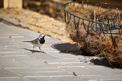 Un oiseau et matériaux pour la construction du n Image libre de droits