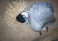 Un oiseau fou et idiot image stock