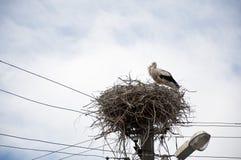 Un oiseau gracieux Grand oiseau migrateur avec le plumage noir et blanc Cigogne blanche et oisillon sur le ciel nuageux Famille d photo stock