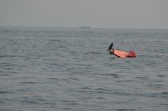 Un oiseau marin appréciant le soleil sur la balise de canal photos libres de droits