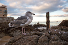 Un oiseau par la mer Photo stock