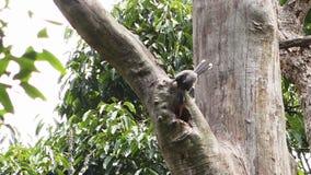 Un oiseau picotant dans un arbre banque de vidéos