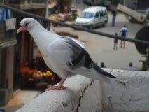 Un oiseau plus étrange sur un balcon Photographie stock libre de droits
