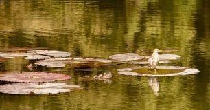 Un oiseau posant dans l'eau Images libres de droits
