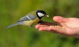 Un oiseau réel dans la main Photos libres de droits