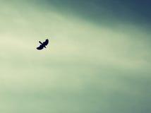 Un oiseau répandant ses ailes et mouche au ciel de ciel rétro image filtrée Photo stock