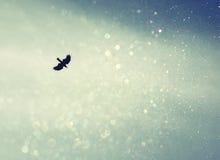 Un oiseau répandant ses ailes et mouche au ciel de ciel rétro image filtrée avec le scintillement Photographie stock libre de droits
