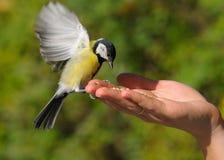 Un oiseau réel dans la main Photos stock