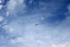 Un oiseau seul dans le ciel bleu images libres de droits
