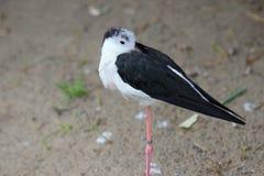 Un oiseau seul se tenant dans le zoo en Bavière Allemagne à Nuremberg images stock