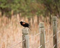 Un oiseau sur un courrier de barrière images stock