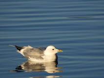 Un oiseau sur l'eau photos stock