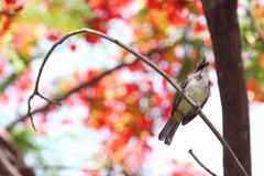 Un oiseau sur la branche Photographie stock
