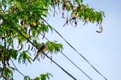 Un oiseau sur la ligne électrique de câble position de colombe d'oiseau étée perché sur a Photos libres de droits