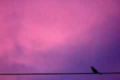 Un oiseau sur la ligne téléphonique contre le coucher du soleil rose Images libres de droits