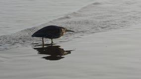 Un oiseau sur la plage de Nudgee dans l'Australie Photos libres de droits