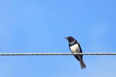 Un oiseau sur le fil en métal Photos stock