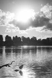 Un oiseau sur le lac Images libres de droits