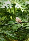 Un oiseau sur pleuvoir Images libres de droits