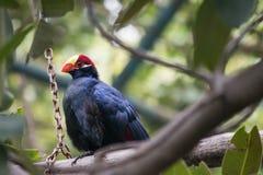 Un oiseau tropical dans un arbre Image libre de droits