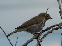 Un oiseau un moineau dans le sauvage Photo stock