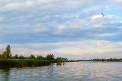 Un oiseau vole au-dessus d'une petite rivière photo libre de droits