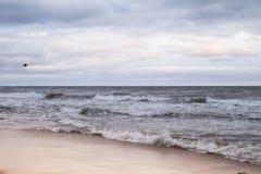 Un oiseau vole au-dessus de la mer baltique images stock