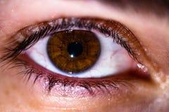 Un ojo marrón hermoso se cerró para arriba foto de archivo