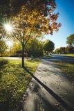 Un'ombra dell'albero nella pavimentazione Fotografia Stock