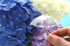 Un ombrello ha tenuto a disposizione con un fondo dell'ortensia Concetto di stagione delle pioggie immagini stock libere da diritti
