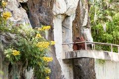 Un orango utan Fotografia Stock Libera da Diritti