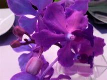 Un'orchidea come centro Fotografie Stock Libere da Diritti
