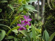 Un'orchidea porpora contro le foglie verdi Immagini Stock