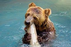 Un orso Fotografia Stock Libera da Diritti