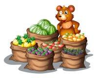 Un oso con las frutas nuevamente cosechadas Foto de archivo