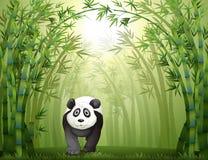 Un oso de panda y un bosque de bambú Imágenes de archivo libres de regalías