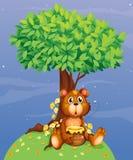 Un oso que sostiene una miel debajo de un árbol Foto de archivo